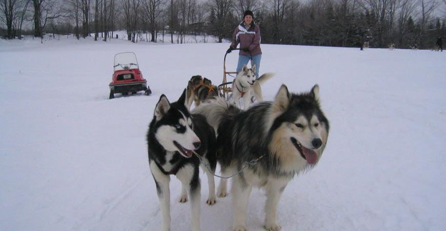 dog sledding tour